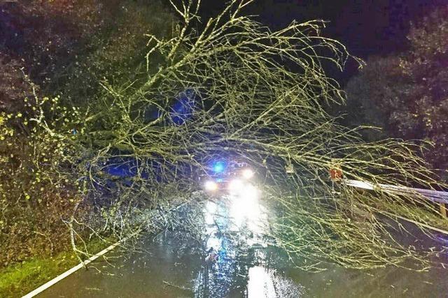 Feuerwehr pumpt Keller leer und räumt Bäume weg
