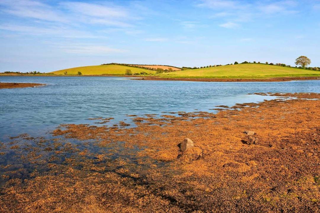 Auf den  Hügeln über Strangford Lough ... der eindrücklichsten Szenen  gedreht.  | Foto: Carsten Krieger, dpa