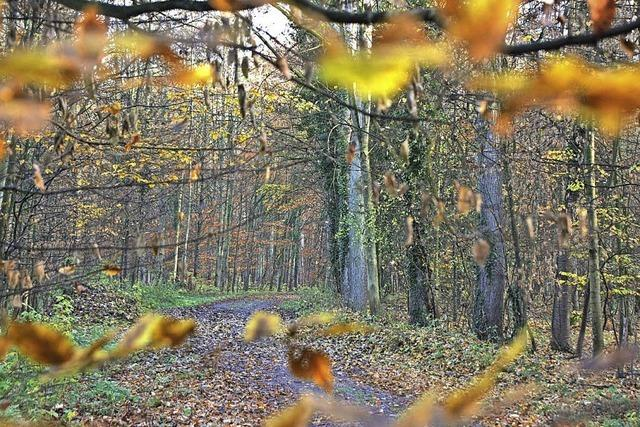 Positive Bilanz im Wald