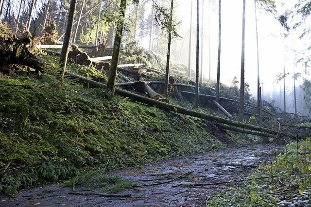 Windhose schlägt Schneise im Wald