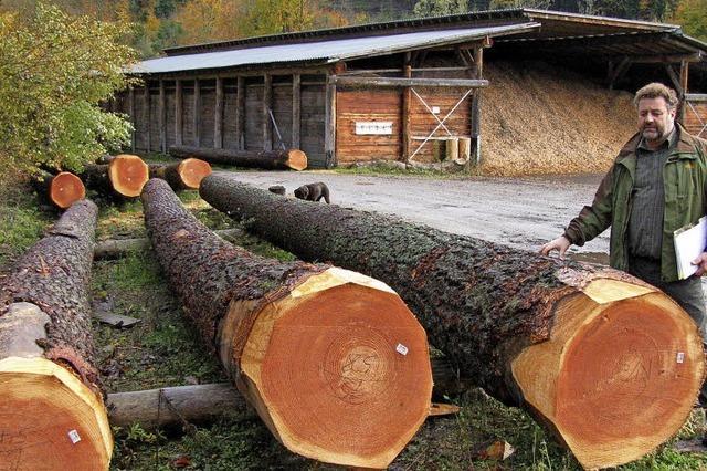 Der Wald als sichere Einnahmequelle
