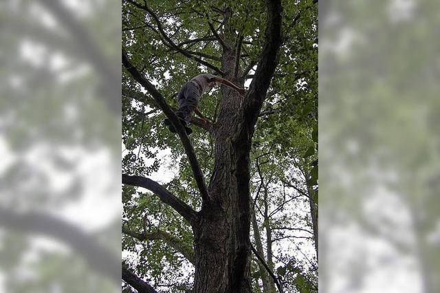 Neuried rechnet mit Überschuss aus seinem Wald