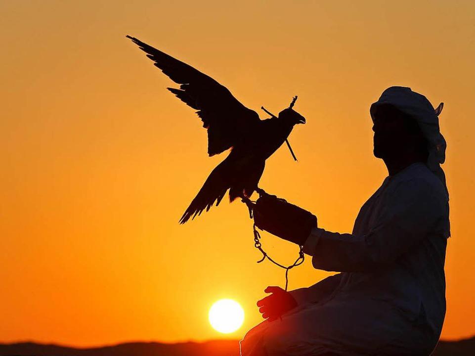 In den arabischen Ländern – wie ...at die Falknerei eine lange Tradition.  | Foto: KARIM SAHIB