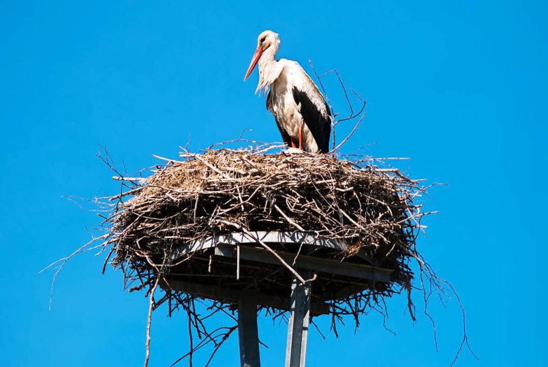 Ein Storch in seinem Nest.  | Foto: Robert Neumann/fotolia.com