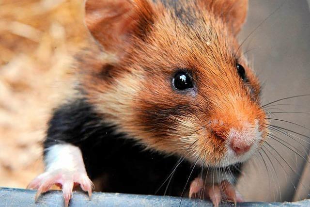 Sind Haustiere Schuld an Allergien?