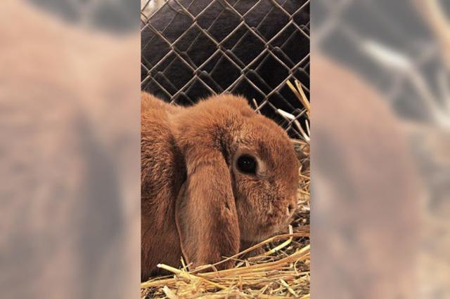 Öflinger Kaninchenzüchter räumen ab