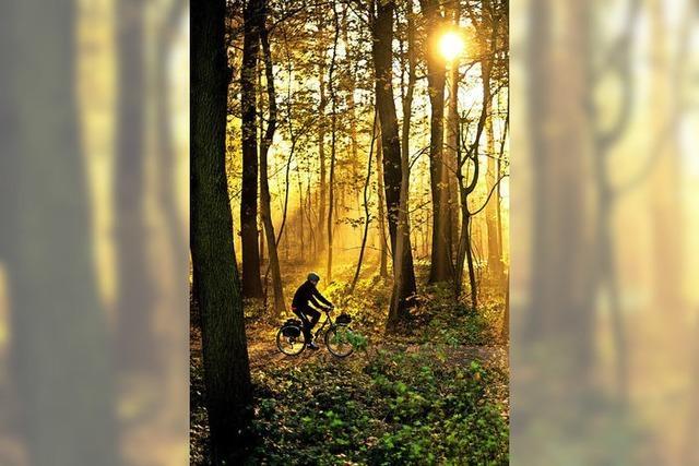 Wie sich die Forstreform auf die Forstgemeinschaft Gundelfingen auswirken wird