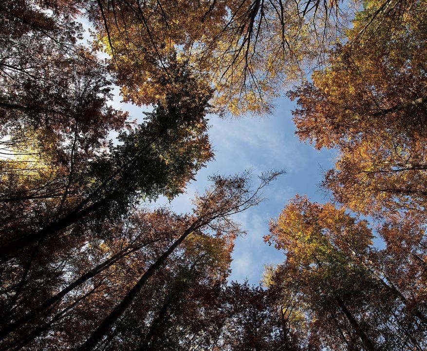 Der Klimawandel hat Auswirkungen auf d...rstungen geeignetere Bäume gepflanzt.   | Foto: dpa