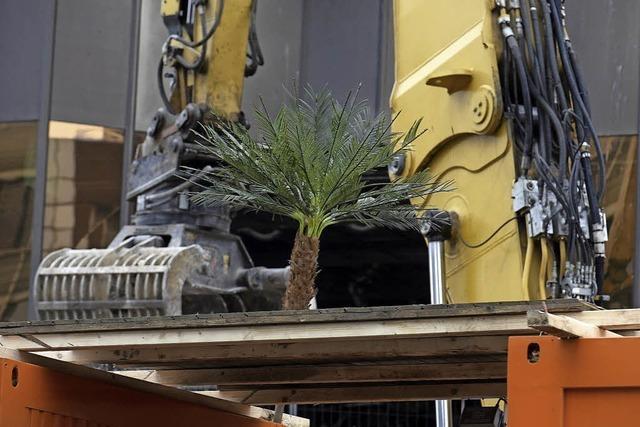 Mini-Palme statt großer Bäume