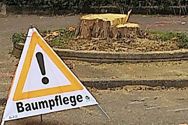 Achtung, Baumpflege!