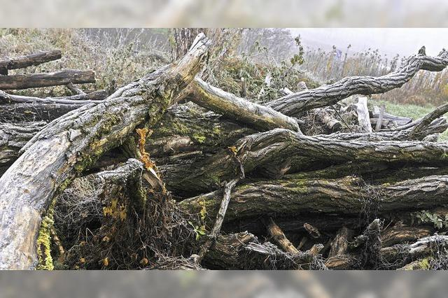 Im toten Holz steckt Leben