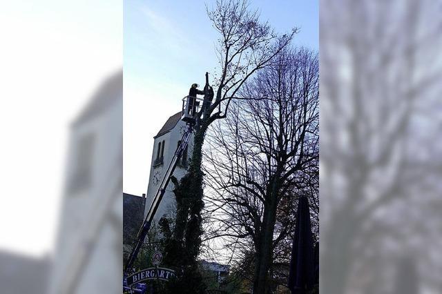 RAUSGEFISCHT: Von Bussen und Bäumen
