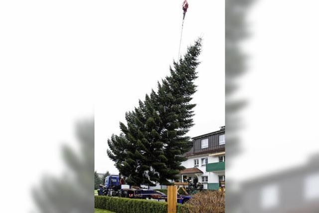Ein Tannenbaum für Berlin