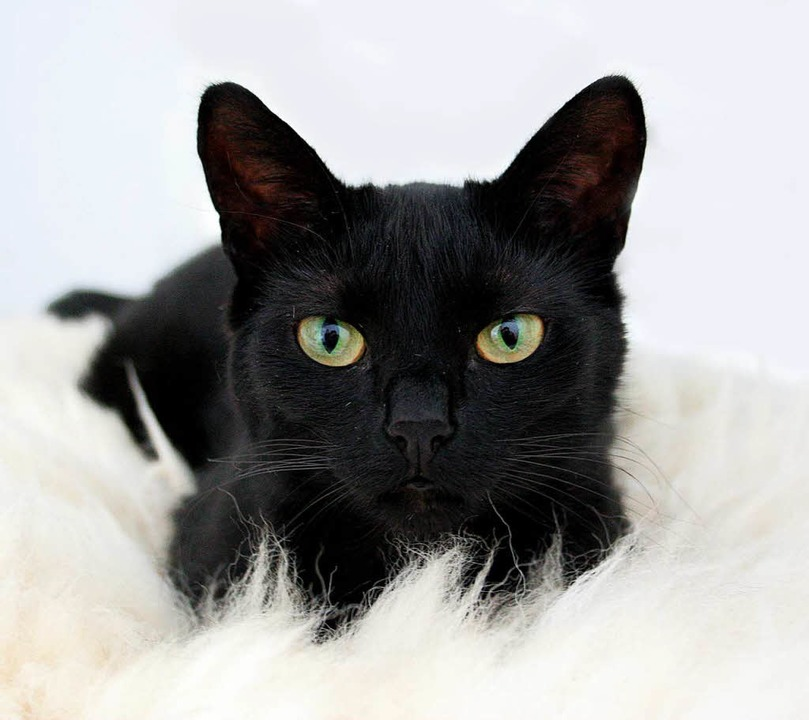 Eine Katze in Lörrach-Brombach ist ern...mer wieder auf die Tiere (Symbolbild).  | Foto: fotolia.com/KSLight