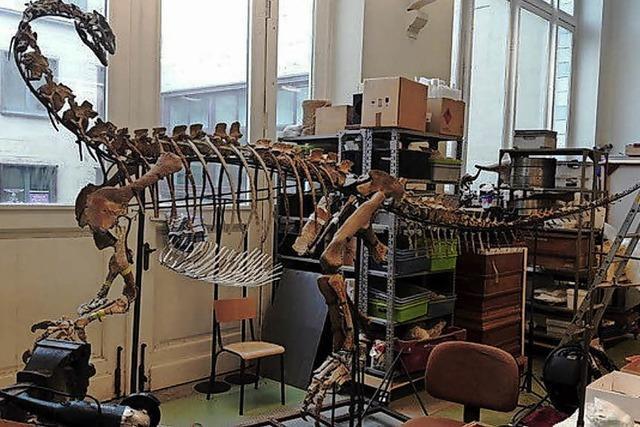 Dino aus Frick kommt nach Brüssel