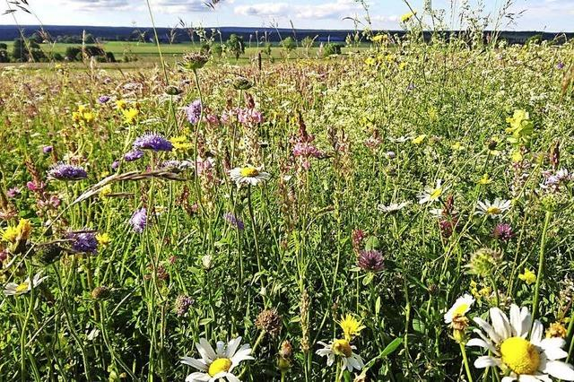 Samenspender erhalten die Vielfalt von Wiesen