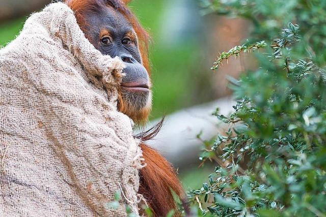 Wenn es Winter wird im Basler Zoo