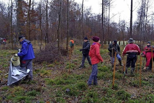 500 junge Bäume wachsen