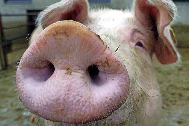 Schlachthaus hat kein Schwein
