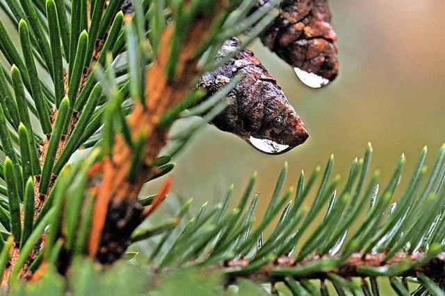 Stadtwald kommt wieder auf einen grünen Zweig
