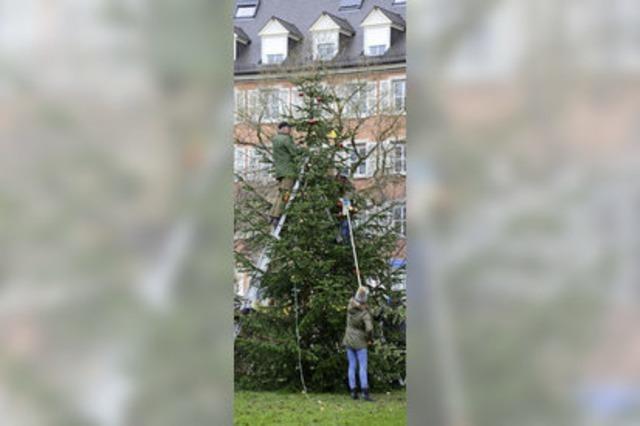 Bürgerverein Brühl-Beurbarung stellt Christbaum auf