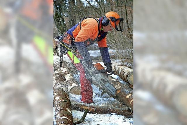 Waldarbeit im Wandel begriffen