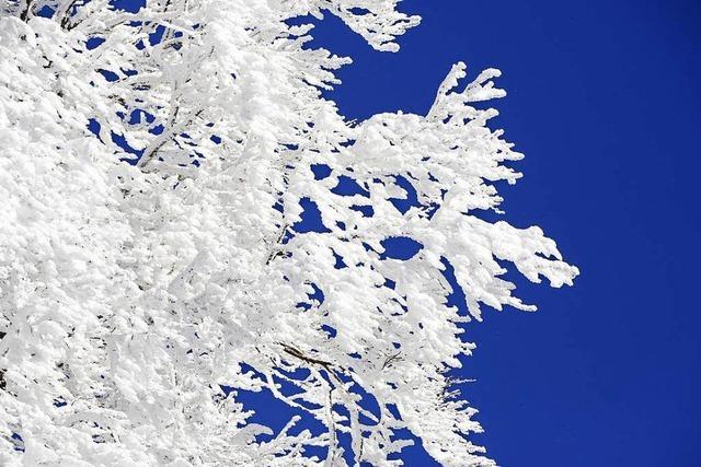Schwarzwald und Freiburg als Winterwunderland