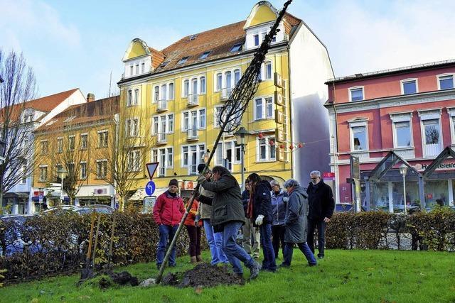Für mehr Bäume im Stadtgebiet