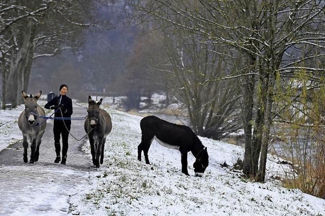 Drei Esel im Schnee