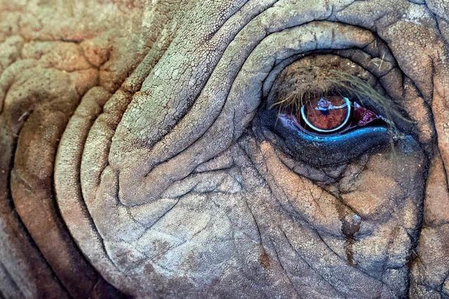 Europa-Park streicht nach Shitstorm die Elefanten aus der Zirkus-Revue