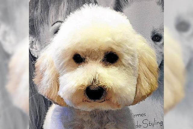 Rust erhöht Hundesteuer