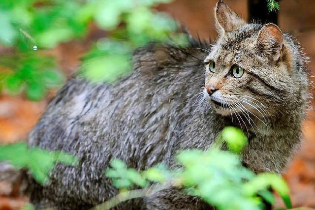 Der Neubau des Zentralklinikums Lörrach wird den Wildtierkorridor verengen