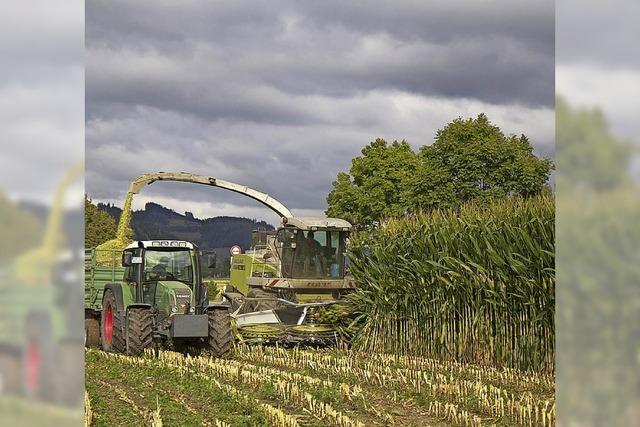 Landratsamt verfügt Fruchtfolge auf Maisfeldern