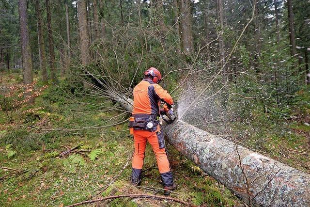 Gemeindewald erweist sich wieder als Sparkässle