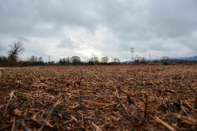 Im Fall des abgeholzten Nimburger Rieds ging wohl einiges schief