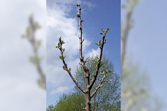 Ein Lebensbaum für jedes Kind