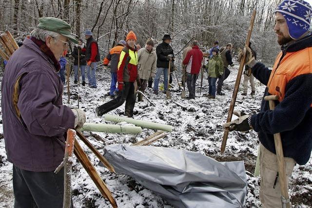 Freiwillige Waldarbeiter forsten auf