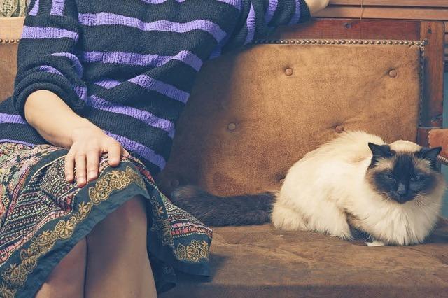 Abigail Tucker beschreibt die Beziehungsgeschichte von Mensch und Katze