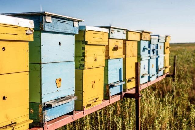 Ohne Bienen kein Leben