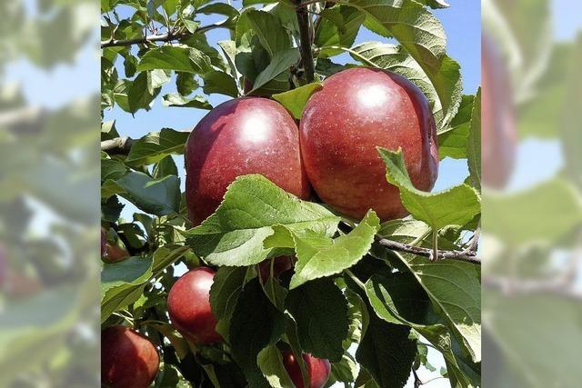 Apfelnotstand im Aargau