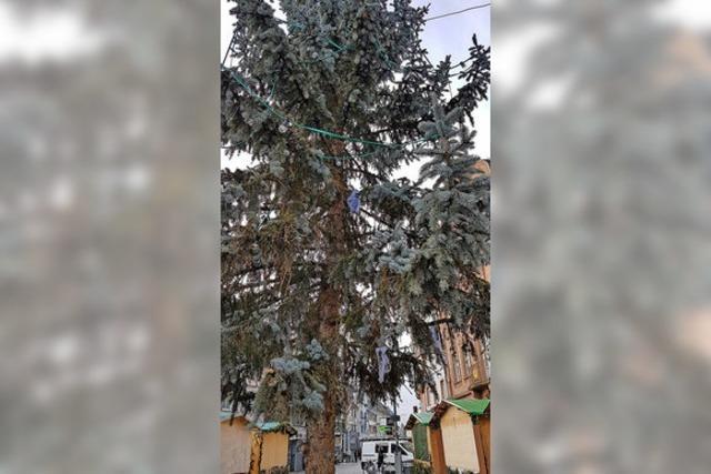 RAUSGEFISCHT: Der Baum polarisiert