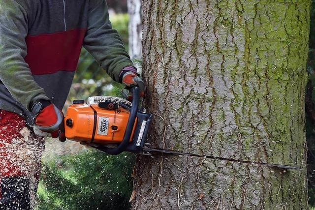 Kompromissvorschlag zur umstrittenen Baumschutzverordnung