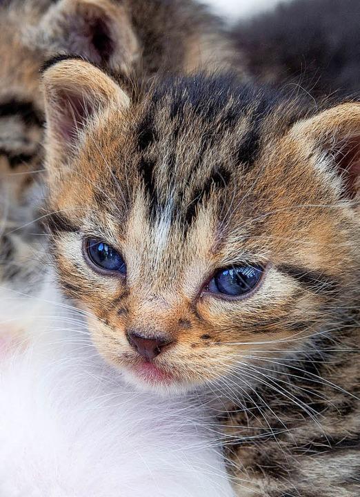 Süß, so ein Katzenbaby     Foto: dpa