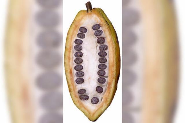 Kakao kann zu hohen Blutdruck senken und wirkt offenbar auch gegen Falten