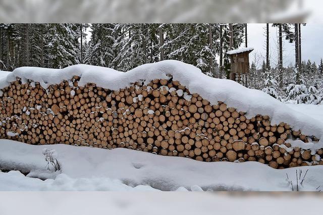 Wald bringt 153 000 Euro Gewinn