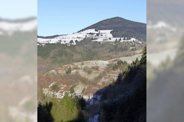 Nabu fordert Tabuzonen für Windkraft im Wald