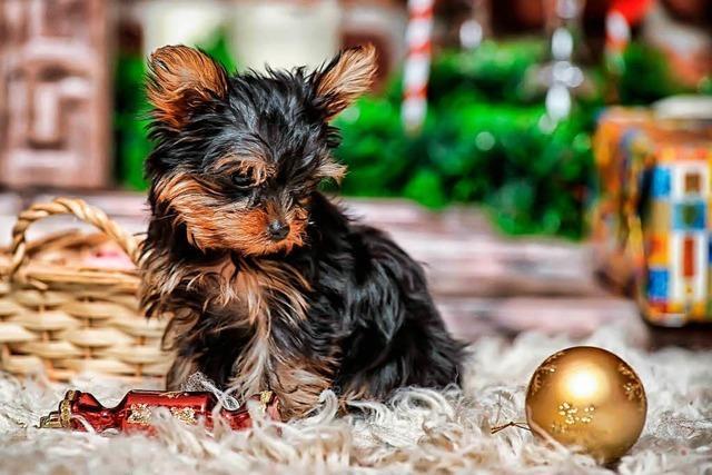 Tiere sollen keine Weihnachtsgeschenke sein