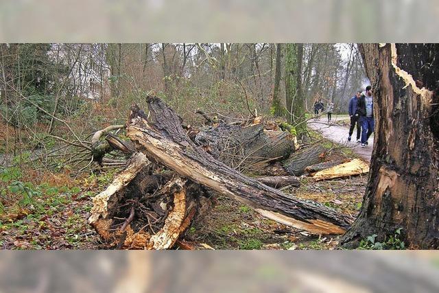 Kein verordneter Baumschutz