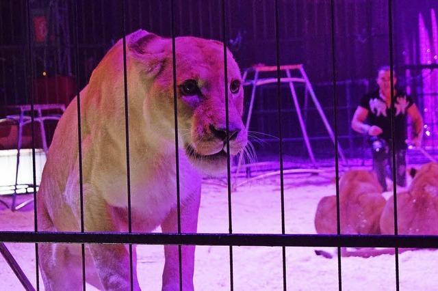 Laser, Löwen, Luftikusse