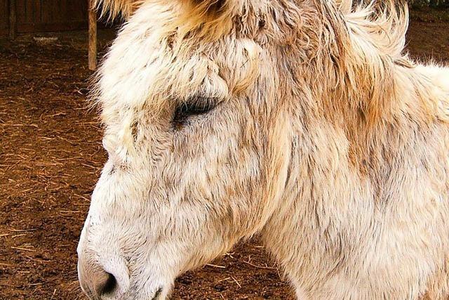 Wundermittel: In China wächst die Nachfrage nach Eselhaut